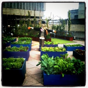 the community roof garden