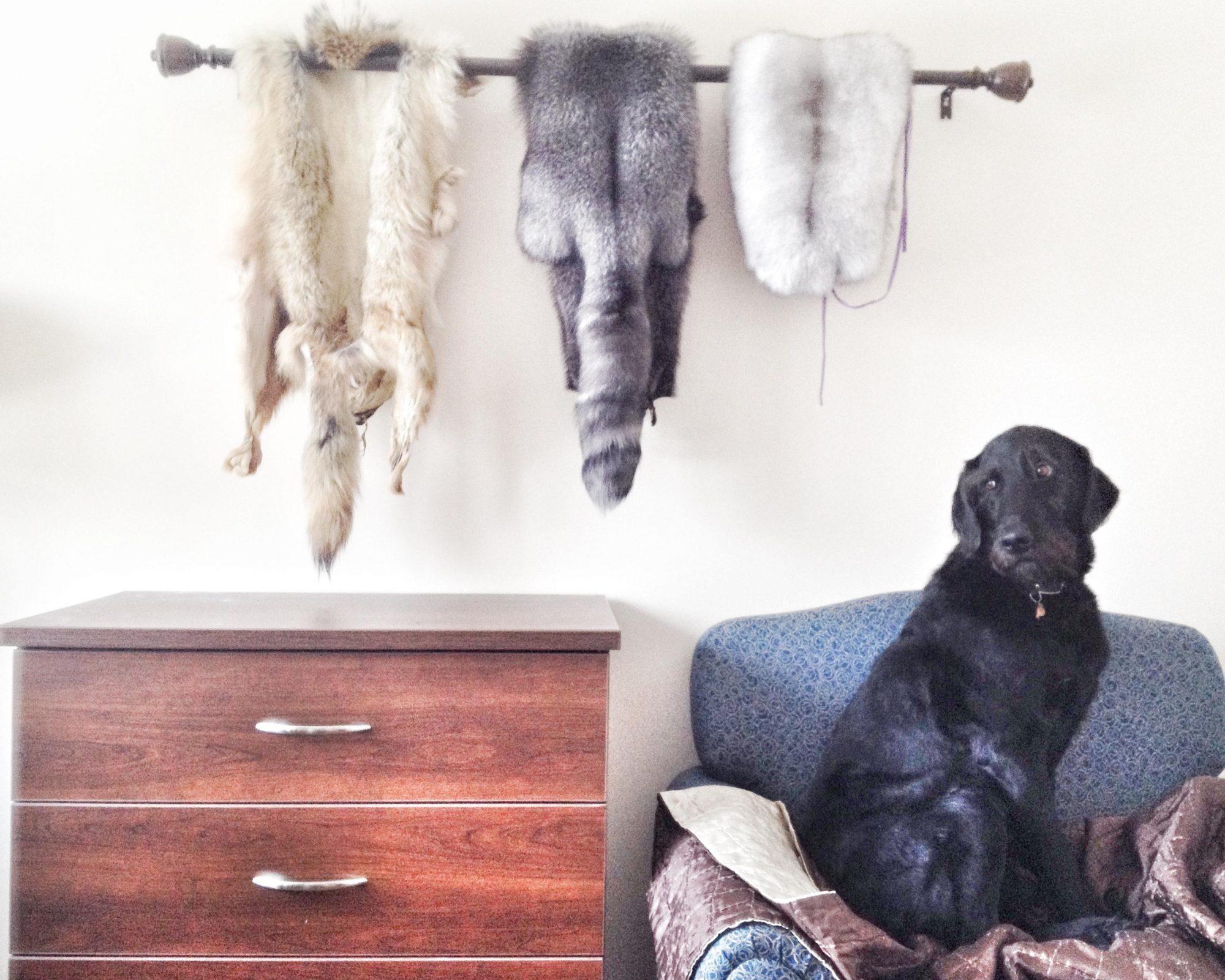 10 - fur