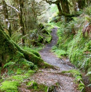Dense and lush forest on the Routeburn Track.