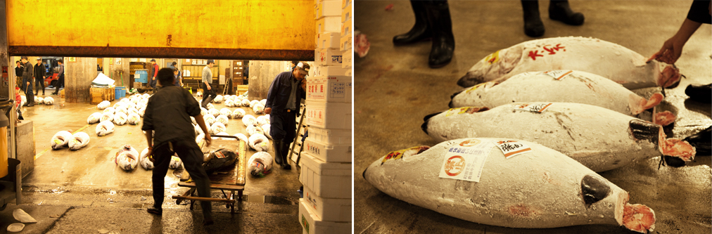 The live tuna auction at Tsukiji is one of the largest in world. Images by Sruthi Vijayan.