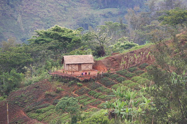 farm, Papua New Guinea, Restless Books, Kira Salak, adventure, solo travel