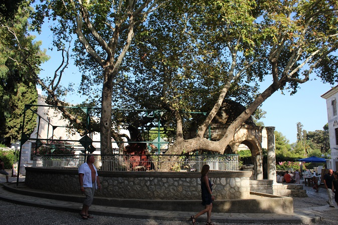 Tree of Hippocrates in Kos, Greece by Go Girl Travel Network