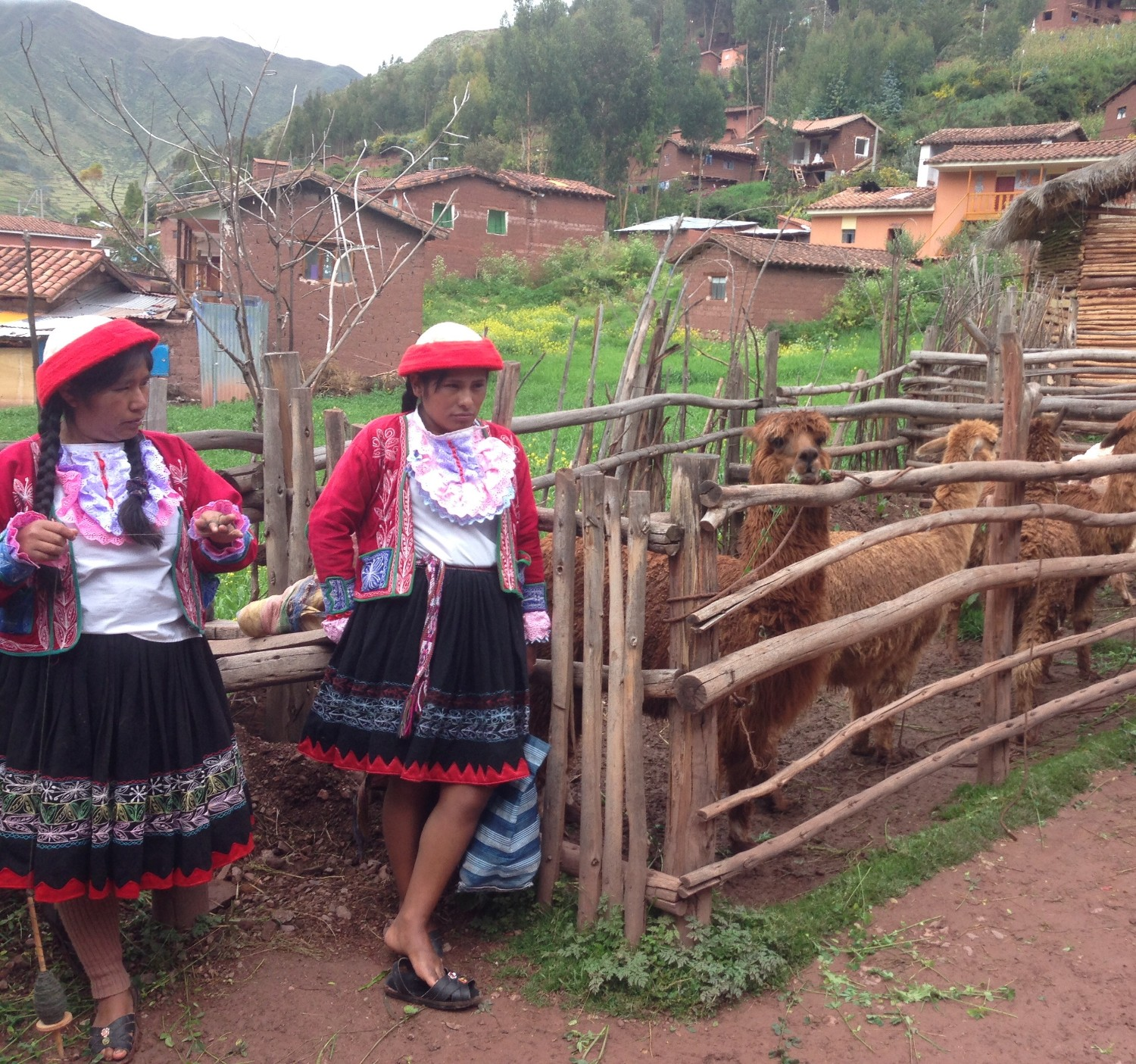 Two women in Ccaccaccollo standing next to llamas in a penned area