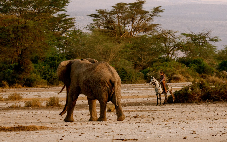 Viewing an elephant at close range via horse safari in Tanzania