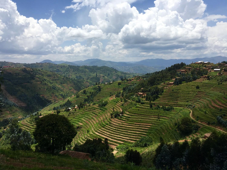 Terraced fields of Rwanda