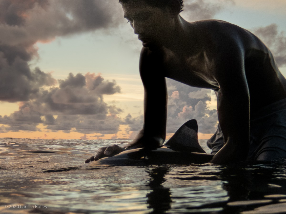 A man playing with a dolphin at the water's surface in Tahiti with a sunset cloudy sky - photo by Larissa Rolley, photography course creator at Wanderful